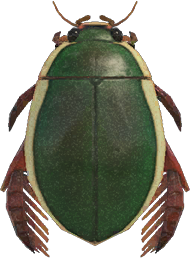 Diving Beetle NH.png