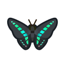 Common Bluebottle NH Icon.png