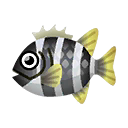 Barred Knifejaw PC Icon.png