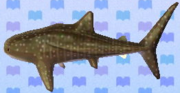 Whale shark NL.png