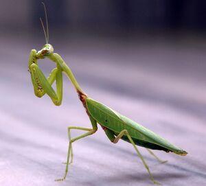 mantis  nookipedia the animal crossing wiki
