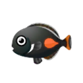 Achilles Surgeonfish PC Icon.png
