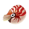 Chambered Nautilus PC Icon.png